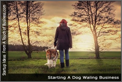Dog Walking Business Overview